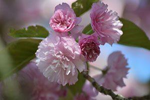 pink-spring-floral